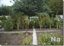 Onze tuin 20070822 (2)