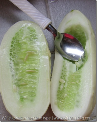 witte-komkommer-vrucht-overlangs