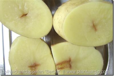 holheid aardappelen holle Berber