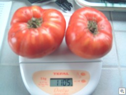 Tomaten-weegschaal