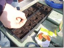 watermeloen_zaaien