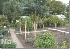 Onze tuin 20070822
