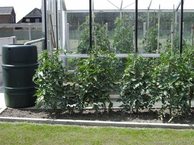 De buitenteelt van tomaten tot aan de eerste pluk tomaten telen met herman in 2007 deel 6 - Hoe u een projector te installeren buiten ...