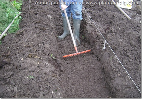 asperges-planten-geul-harken-nivelleren