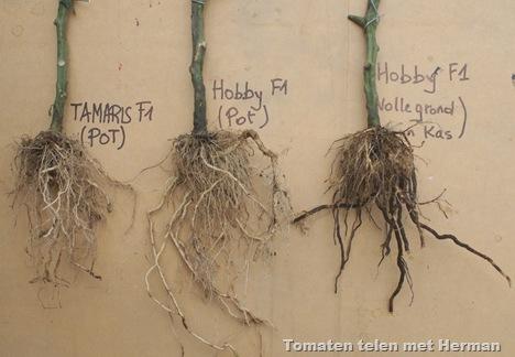 herman_wortels_tomaten