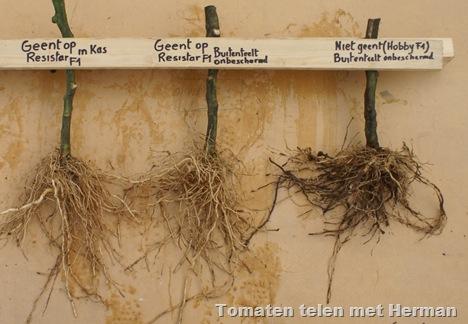 kurkwortel tomaten geent herman