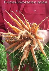 wortelen telen