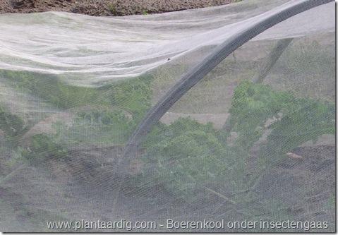 boerenkool_insectengaas