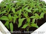 tomaten zaaien 2008-18