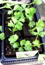 bleekselder planten