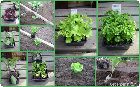 groenteplanten  collage