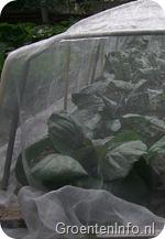 kool insectengaas