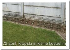 Kropsla kweken in kleine koepel, pas geplant