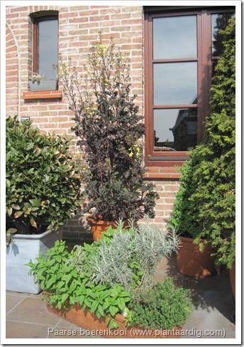 paarse boerenkool pot 2010