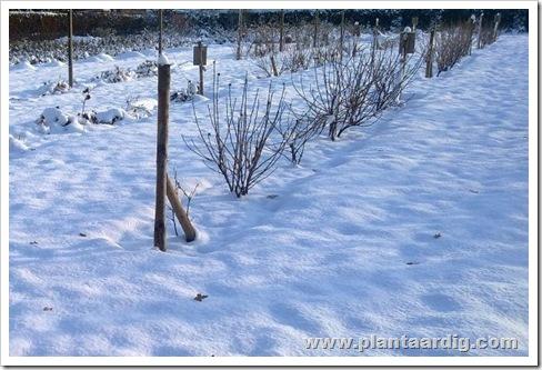 fruittuinsneeuw