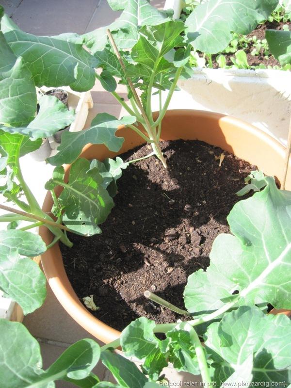 groeien planten in zand
