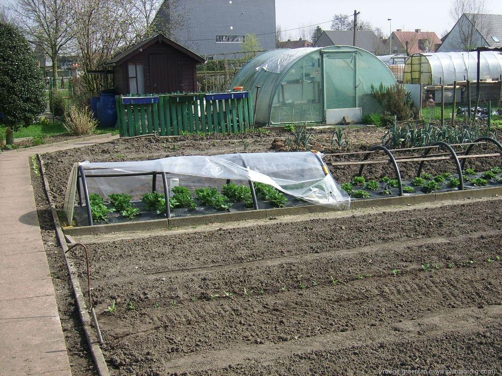 Zelf Serre Bouwen : Kweek je eigen lentegroenten in een handige diy serre