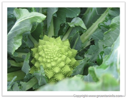 Broccolikiemen kweken