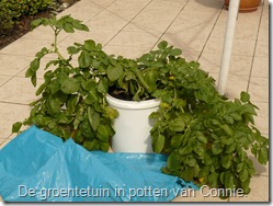 groenten-potten-aardappelen (800x600)