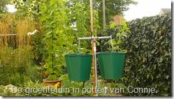 groenten-potten-bonen-in-emmers (800x450)