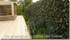 groenten-potten-prei (800x450)