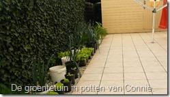 groenten-potten-prei-sla (800x450)