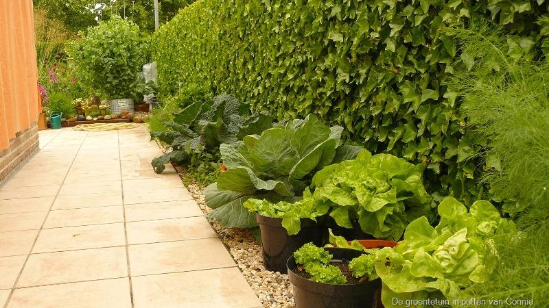 Groenten kweken in pot