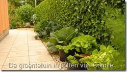 groenten-potten-savooikool-sla (800x450)