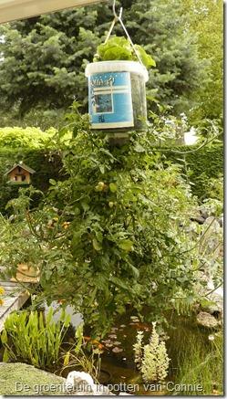 groenten-potten-tomaten-hangen-met-sla (450x800)