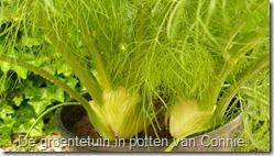 groenten-potten-venkel (800x450)