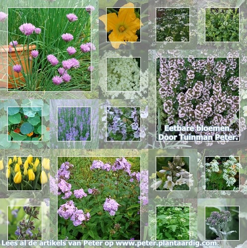 collage-eetbare-tuin