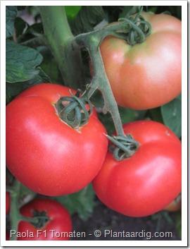 Paola_F1_tomaten2