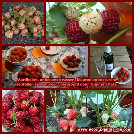 aardbeien-rassen-smaak