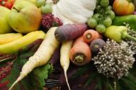 worteltjes in velerlei kleuren en vormen.
