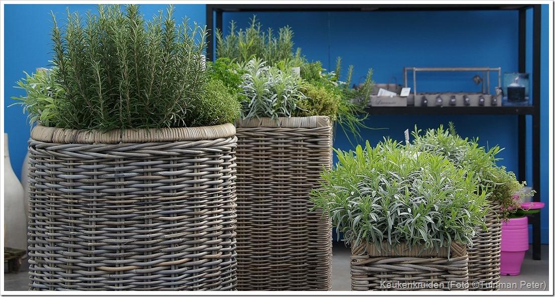 Keukenkruiden soorten kenmerken gebruik teelt en vermeerdering groenteninfo - Model van het terras ...