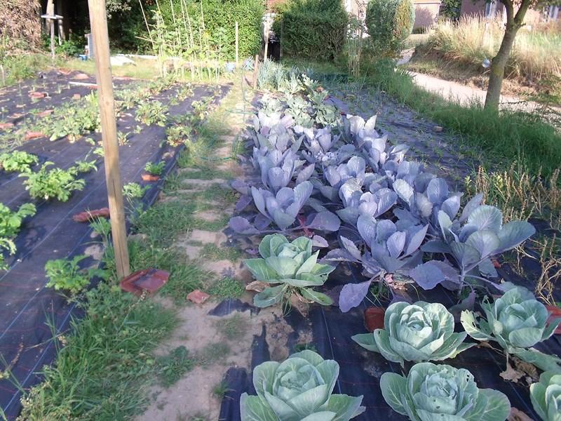 Zelf een groentebed op worteldoek aanleggen groenteninfo - Hoe om te beseffen een tuin ...