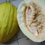 9 aug ** Meloen voor consumptie. Witgeel vruchtvlees, met (in vergelijking met Charentais meloenen) een nogal grote holte gevuld met zaden.