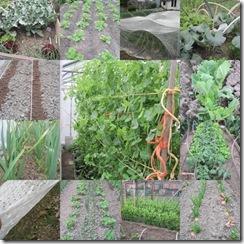 volkstuin-groenten